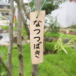 natsutsubaki