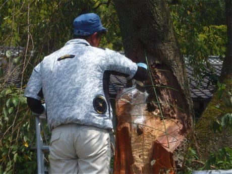 5)腐朽を取り除いた面に殺菌材を塗布